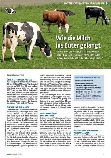 Milchentstehung in der Kuh