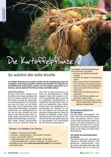 Die Kartoffelpflanze - So wächst die tolle Knolle