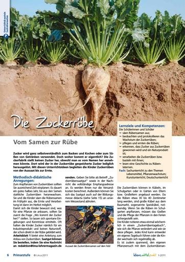 Die Zuckerrübe - Vom Samen zur Rübe
