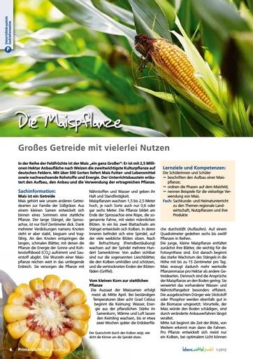 Die Maispflanze - Großes Getreide mit vielerlei Nutzen