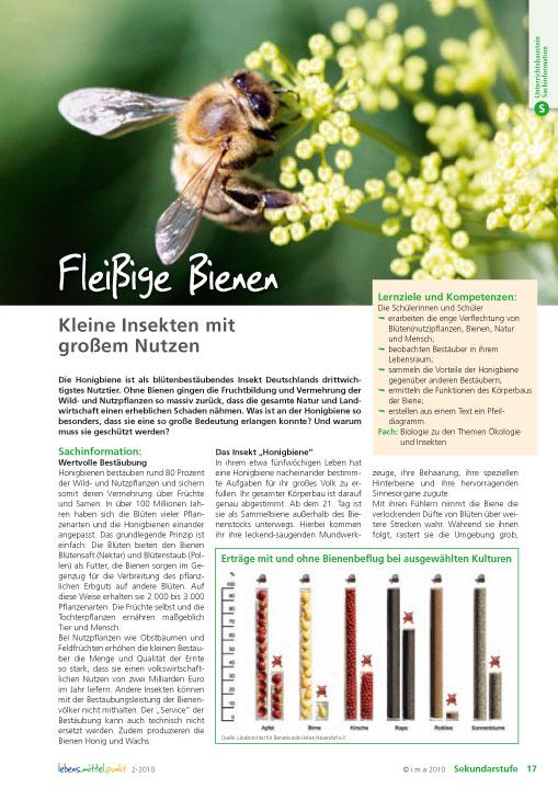 Fleißige Bienen - Kleine Insekten mit großem Nutzen