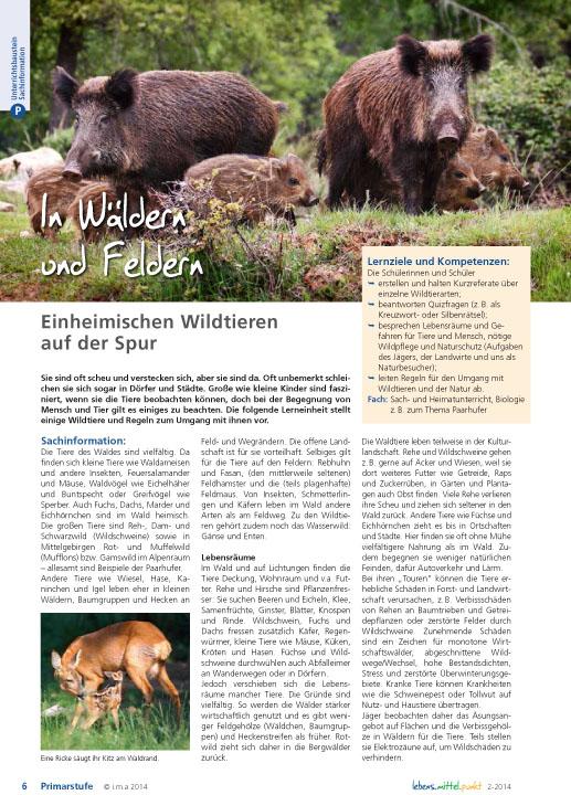 In Wäldern und Feldern - Einheimischen Wildtieren auf der Spur