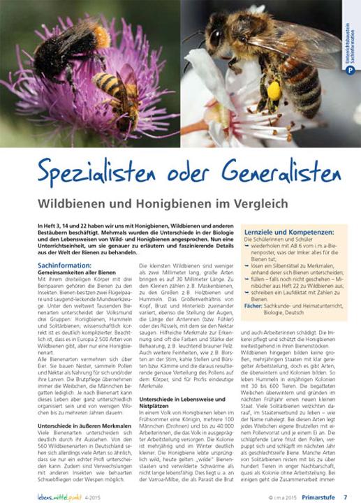 Spezialisten oder Generalisten. Wildbienen und Honigbienen im Vergleich