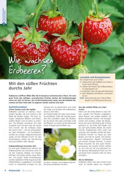 Wie wachsen Erdbeeren?