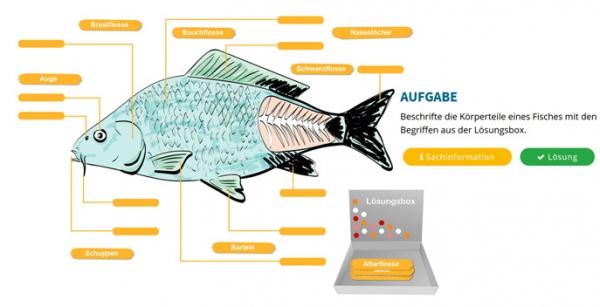 Ins Netz gegangen: Nutztiere unter Wasser