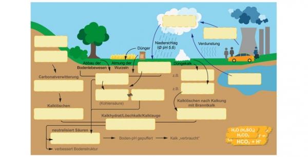 Bodenchemie mit Kalk